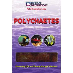 Polychaetes (Marines & Freshwater)
